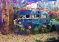 Fish Tank Bus Toy