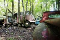 VW Bus in the Woods