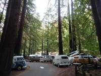 Burlington Campground Humboldt Redwoods