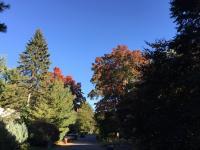 Fall leaves EV