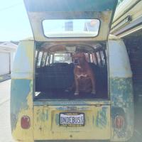 Allie and Bus