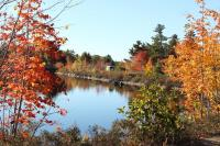 Bay window campers and fall colours