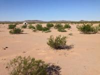 Desert Westy