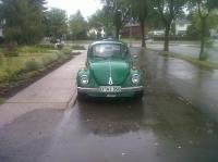 Green Bug in Edmonton