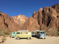 Palm Canyon Arizon