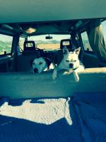 Bela and Flipper in the van