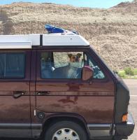 Vanagon Trip with dog