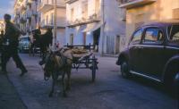 Vintage photo of a mule.