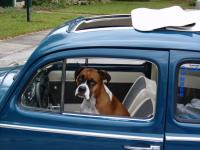 the real driver of my ragtop!
