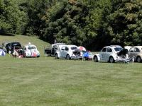 field of VW's