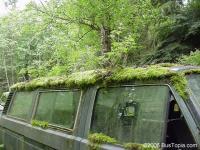 moss garden vanagon