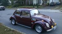 my 65 bug