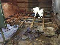 Tyvanasaurus Wrecks disassembly continues