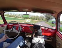 Dogs and VW's