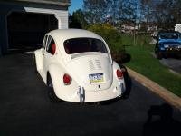 my 69 bug