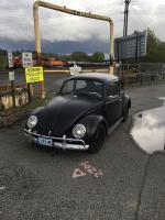 Peppy - '64 Bug