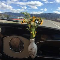 Fresh roadtrip flowers
