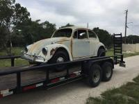 67 Texa Hill Country Bug