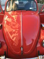 73 Beetle