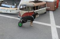 Dog and his small Bus project