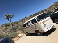 Joshua Tree & Buss