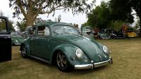 Green Oval Beetle