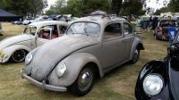 Split-Window Beetle Standard