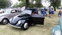 Split-Window Beetle