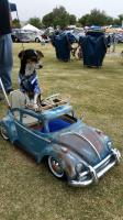 Dog with his Beetle ride