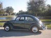 1960 Semaphore Beetle