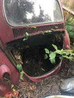 1963 red beetle body engine compartment