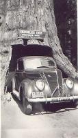 Chandelier Tree Leggitt Ca 1941