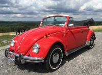 My Beetle- Summer 2017