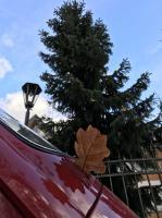 bug autumn