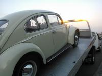 1967 Mexican Beetle