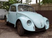 Project Beetle