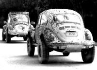 Muddy Bugs