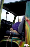 1978 VW Westfalia Bus - Traveling Kitten