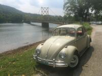 1965 Bug Panama Beige, all stock with 6 volt system