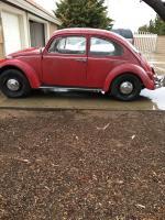 1967 VW Bug