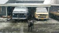 Vanagons in snow