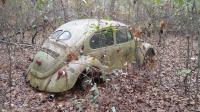 1971 & 1973 VW beetles