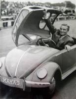 Mahag beetle