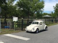 Harvey in front of Winter Springs Dog Park