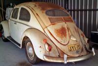 rusty bugs