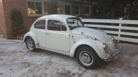 1966 Pearl White Beetle