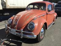 Coral 58 beetle
