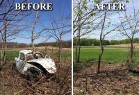 Beetle gone.. Tree Saved!