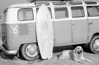 VW T1 surf