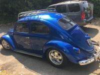 59 Bug